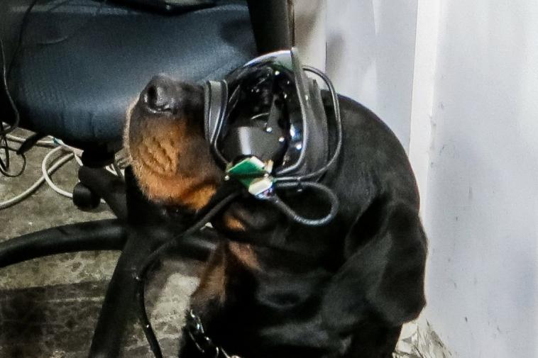 Армия США представила результаты первых опытов с AR-очками для собак