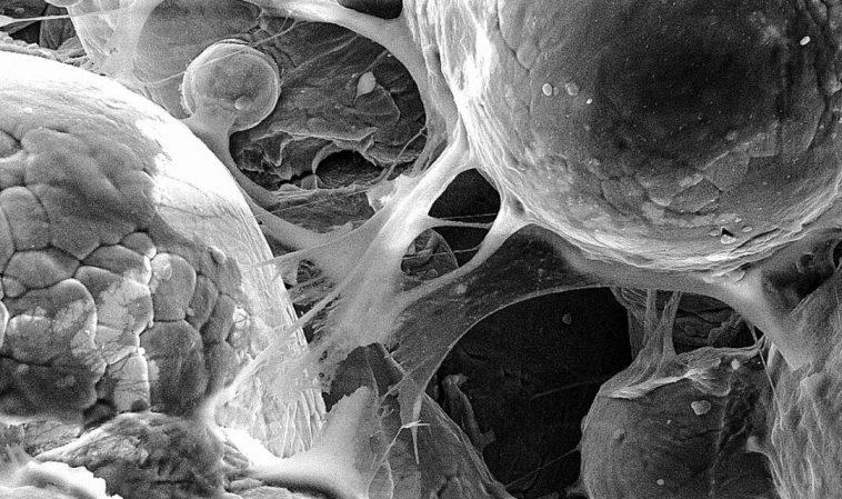 В Корнелльском университете научились печатать на 3D-принтере биомедицинские детали со сверхзвуковой скоростью