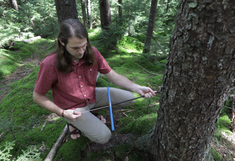 Биологи выяснили, что леса начали потреблять больше углекислого газа