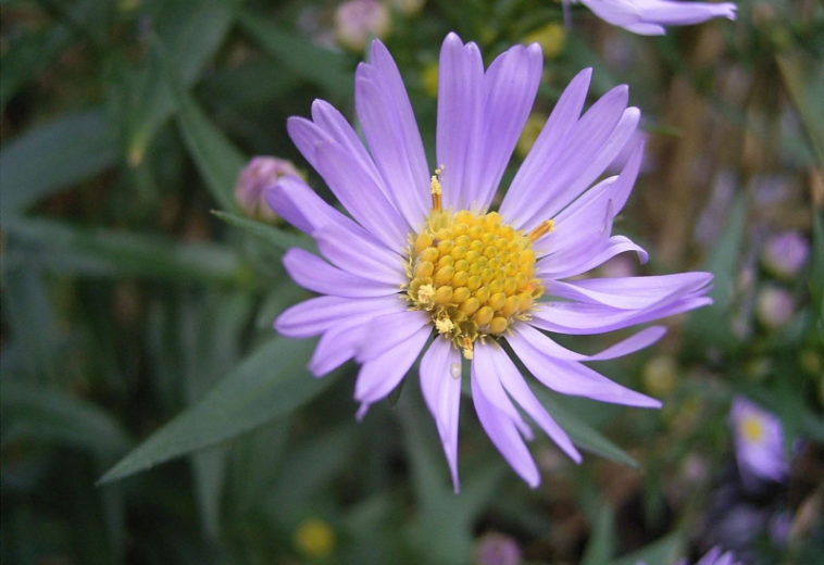 Фотография одного цветка генерирует 20% трафика Wikimedia Commons