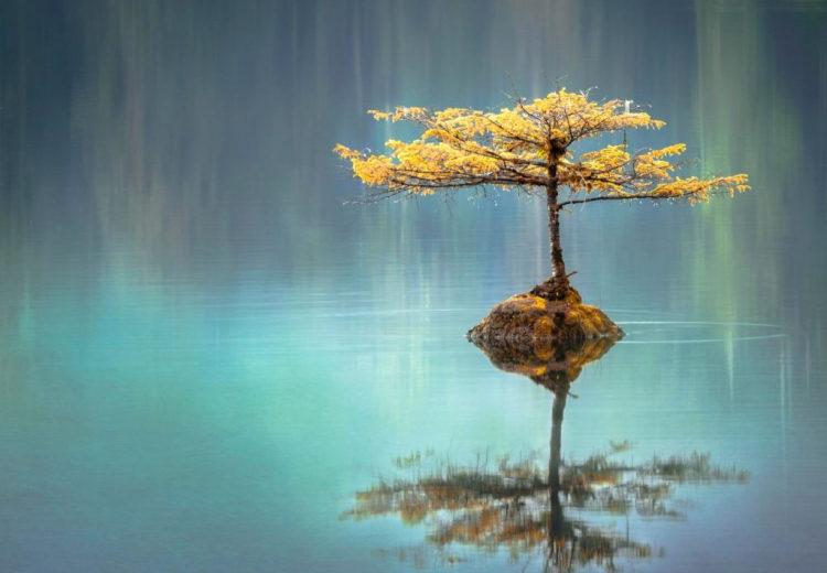 Двоичные деревья Python на практике: зеркальное дерево