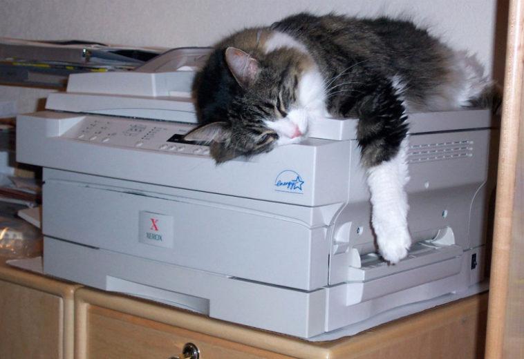 Microsoft исправила баги печати в более старых версиях Windows