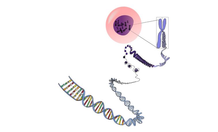 Nvidia и исследователи из Гарварда научили ИИ находить активные зоны в клеточных ДНК