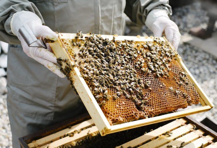 Американский мёд до сих пор радиоактивен из-за ядерных испытаний