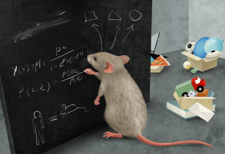 Мыши продемонстрировали неожиданные способности к абстракции и делению объектов на категории