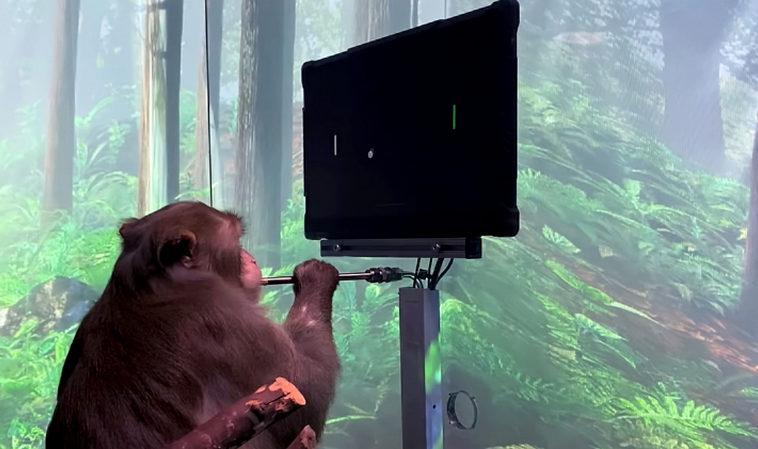 Neuralink показала обезьяну, которая играет в пинг-понг силой мысли