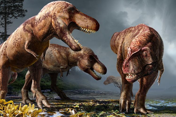 По подсчётам палеонтологов на Земле жило больше 2,5 млрд тираннозавров