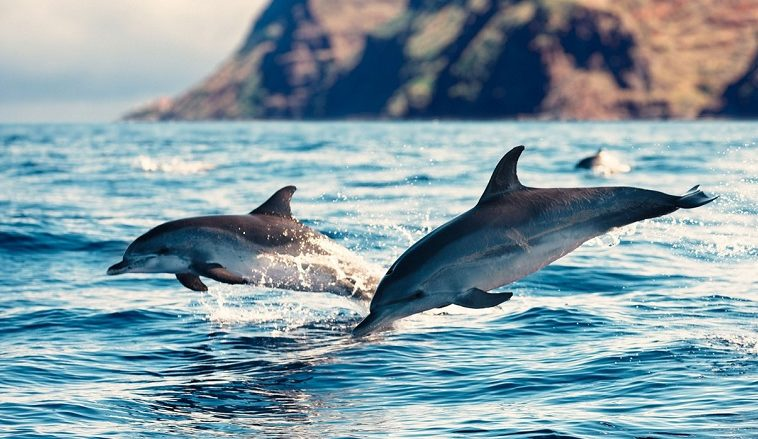 У дельфинов мужского пола обнаружили представление о командной работе