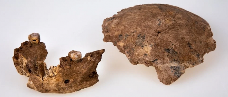 Антропологи нашли в Израиле неизвестный древний вид Homo
