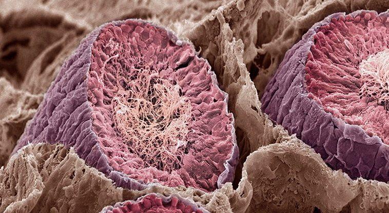 Набор белков мозга по составу оказался ближе всего к яичкам