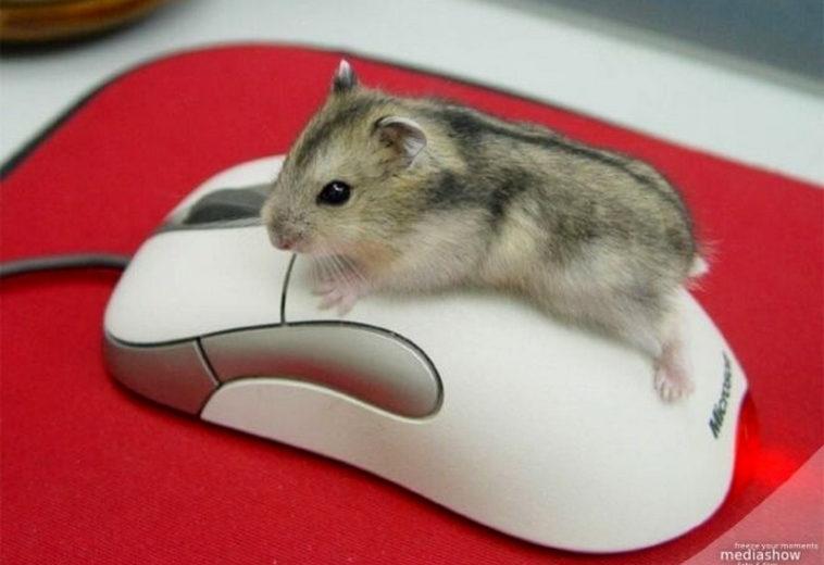 Ученые научились определять действия пользователей по движениям курсора мыши