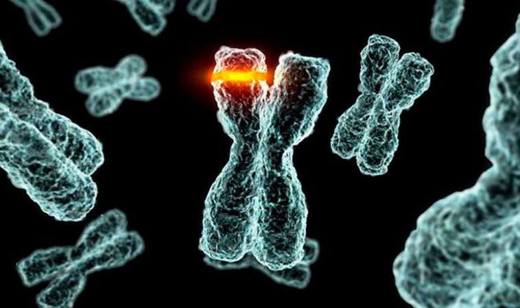 В Азии 20 тысяч лет назад прошла эпидемия коронавируса
