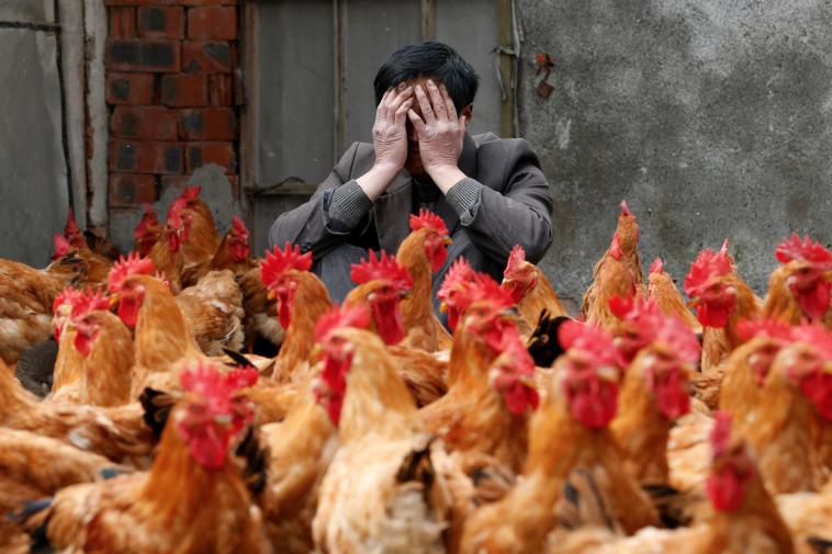 В Китае зафиксировали первый случай заражения человека птичьим гриппом H10N3