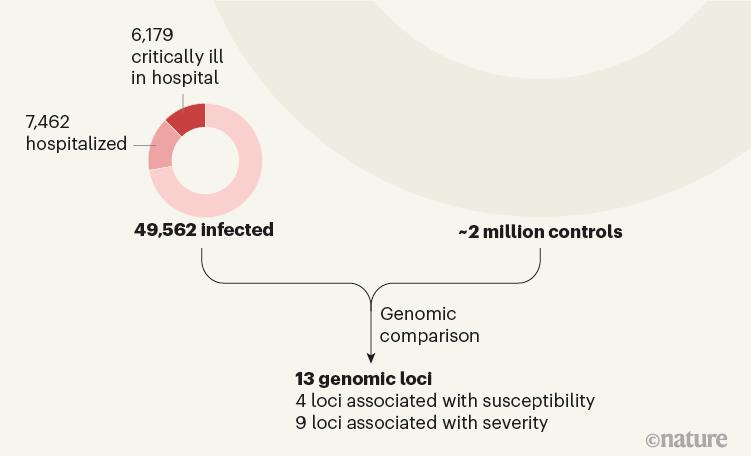 Исследователи нашли 40 генов-кандидатов, способных влиять на степень тяжести COVID-19