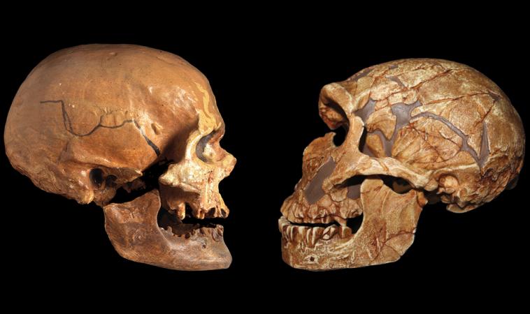 В геноме современного человека содержится всего 1,5—7% вариаций, уникальных для Homo Sapiens