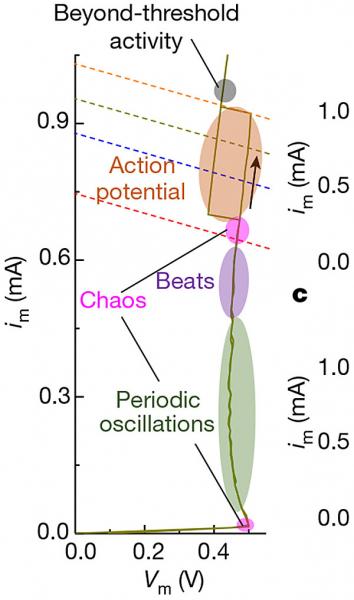 issledovateli pokazali iskusstvennyj nejron v vide ustrojstva ff29430 - Исследователи показали искусственный нейрон в виде устройства