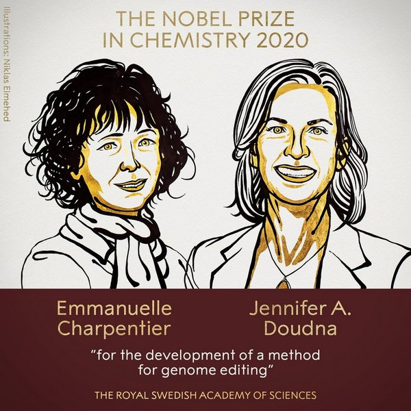 nobelevskuju premiju po himii vruchili za perepisyvanie koda zhizni 36f111b - Нобелевскую премию по химии вручили за «переписывание кода жизни»